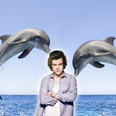 Harry Styles Has A Public Beef With SeaWorld And It's Amazing