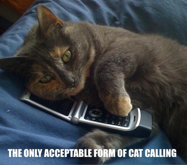 catcalling meme