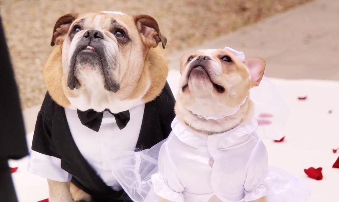 john legend performs at romantic dog wedding popbuzz