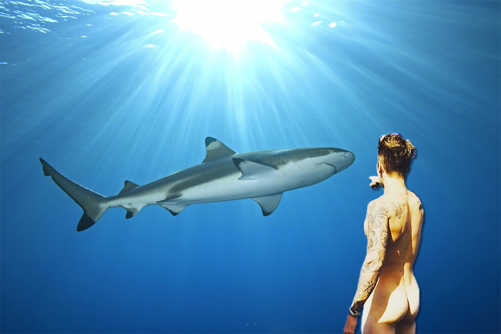 Naked Bieber vs. Sharks