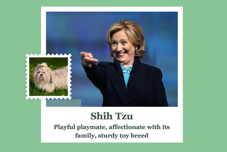 hilary dog