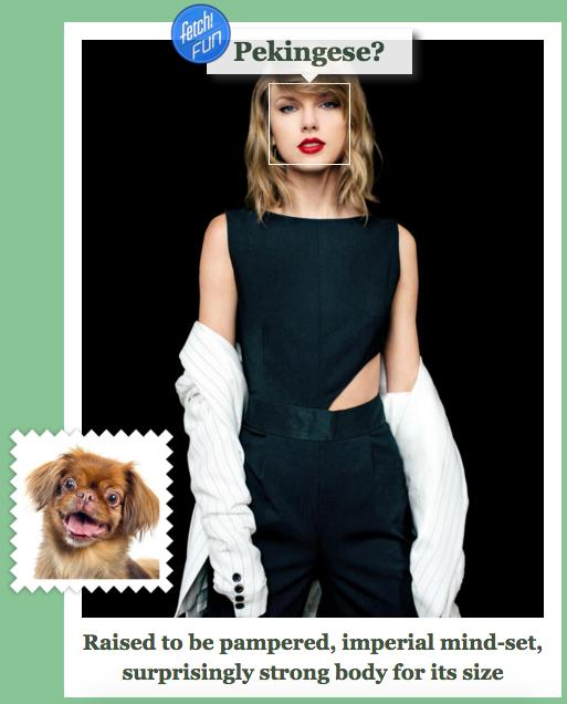 Taylor swift dog