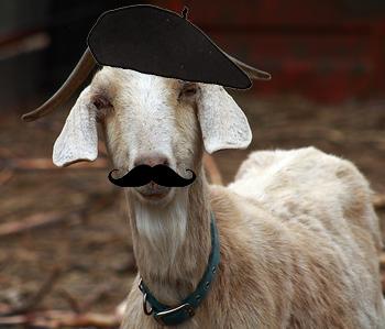 french goat