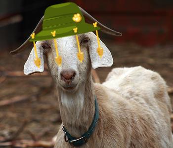 Oz goat