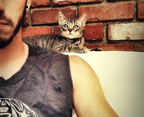 josh dun cat 3