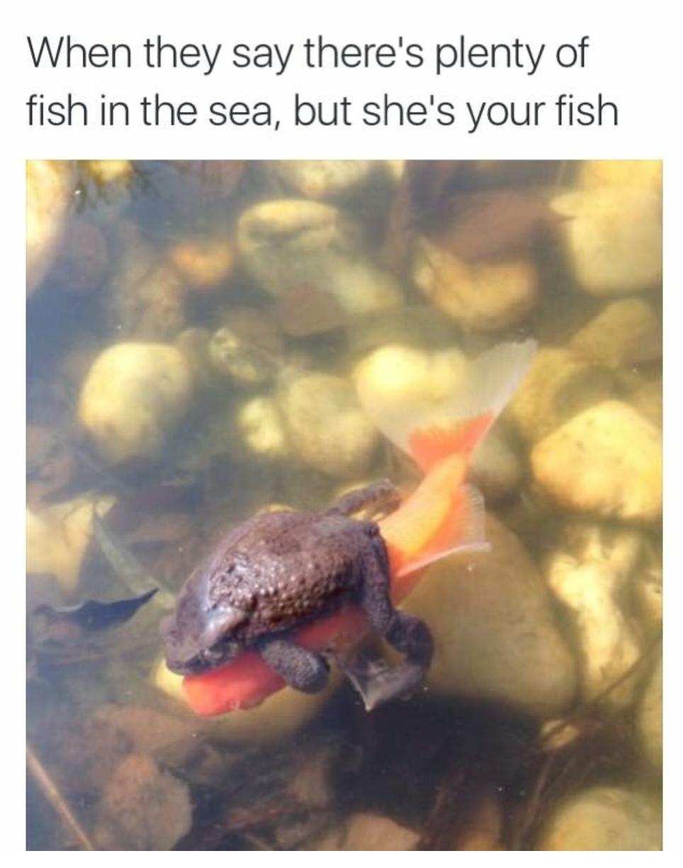 frog fish meme