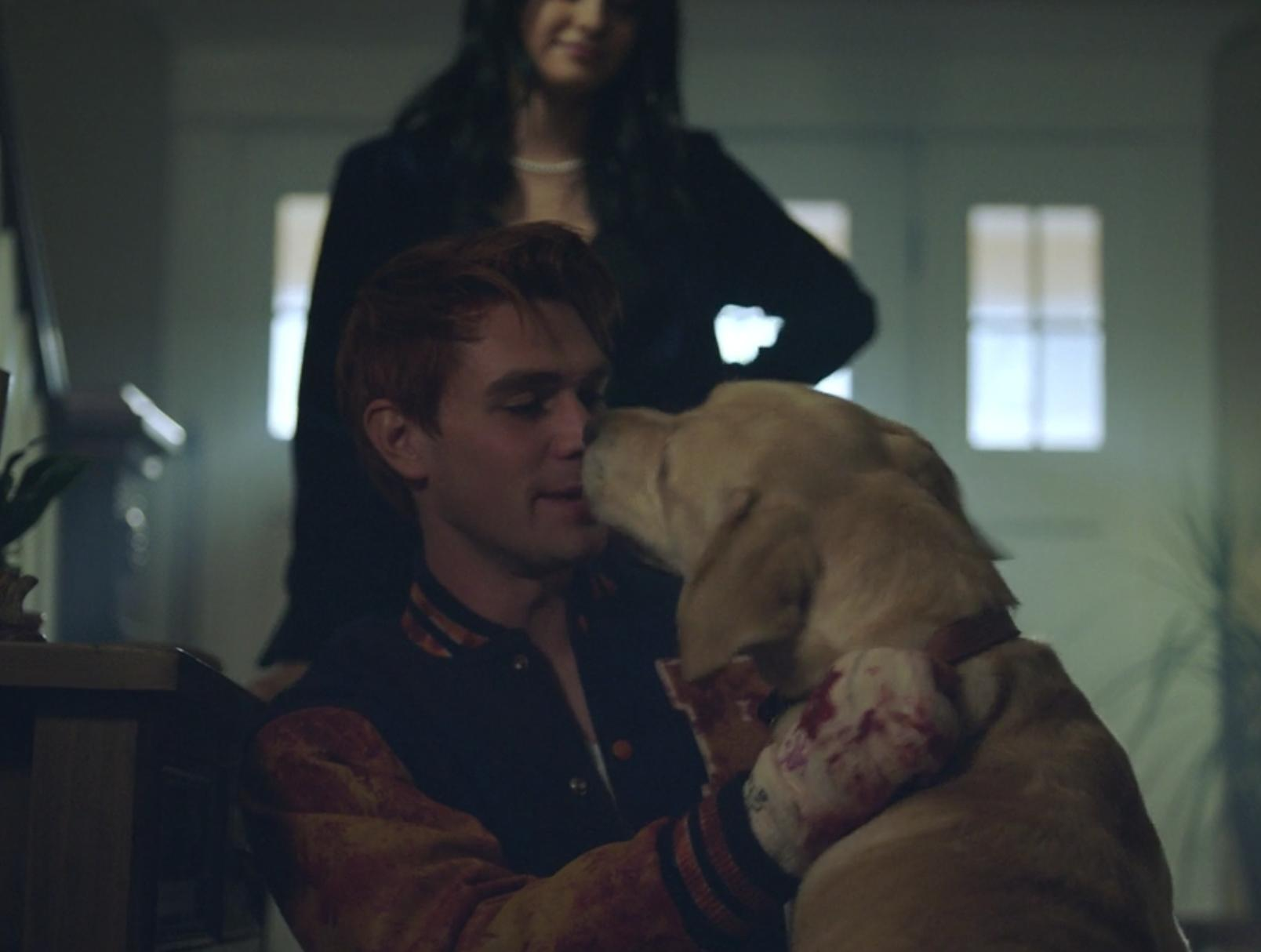 Archie Andrews Dog