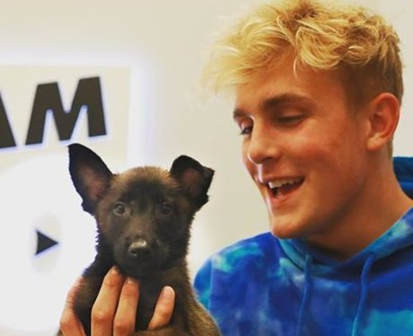 Jake Paul pet dog