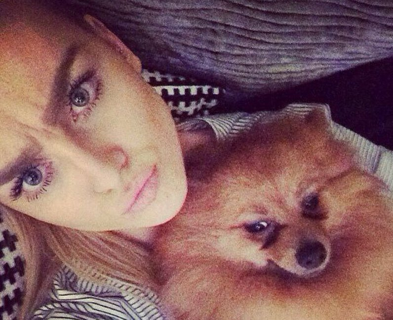 Perrie Edwards Hatchi Teddy dog