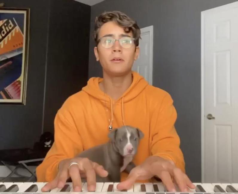 Michael Cimino musician